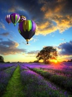Purple N Flower Mobile Wallpaper
