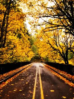 Autumn N Sunset Mobile Wallpaper