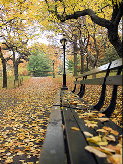 Bench N Autumn Mobile Wallpaper