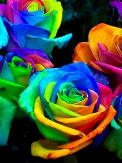 Colourfull Roses Mobile Wallpaper