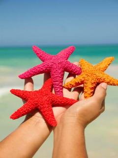 Three Starfish Mobile Wallpaper
