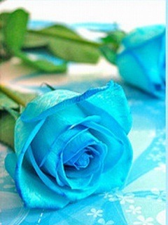 Blue Roses Mobile Wallpaper
