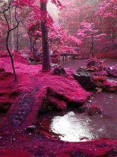 Pink Nature Mobile Wallpaper