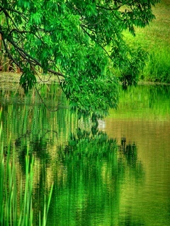 Reflection Green Mobile Wallpaper