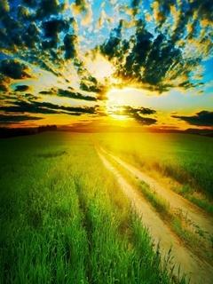 Sunset Field Mobile Wallpaper