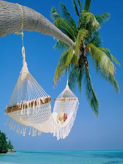 Tropical Rest Mobile Wallpaper
