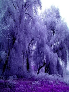Purple Nature Mobile Wallpaper