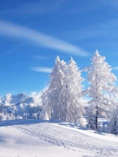 Winter Day Mobile Wallpaper