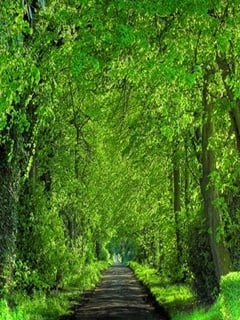 Green Path Mobile Wallpaper