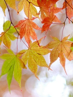 Autumn Leafs Mobile Wallpaper