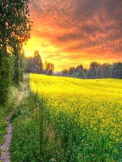 Morning Field Mobile Wallpaper