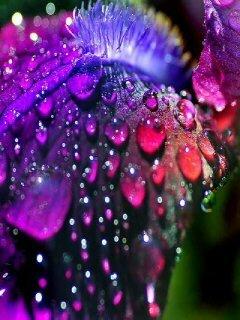 Colors Flower Drops Mobile Wallpaper