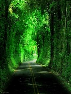 Green Tunnel Mobile Wallpaper