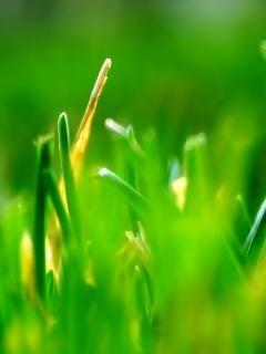 Green Grass Mobile Wallpaper