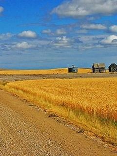 Grain Field Mobile Wallpaper