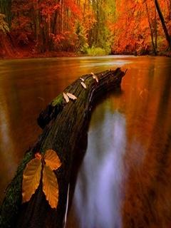 River Autumn Mobile Wallpaper