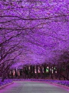 Purple Path Mobile Wallpaper