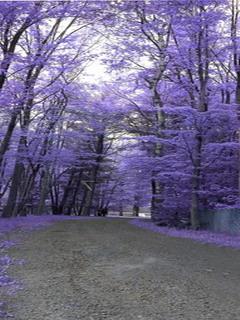 Purple Autumn Mobile Wallpaper