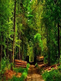 Deep Forest Mobile Wallpaper