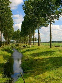 River Green Trees Mobile Wallpaper