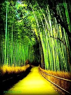 Bamboo Bridge Mobile Wallpaper