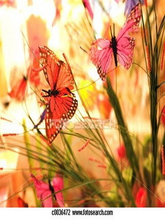 Cute Butterfly Mobile Wallpaper