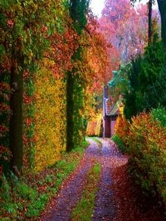 Autumn Road Mobile Wallpaper