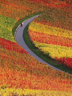 Autumn Colors Vineyards Mobile Wallpaper