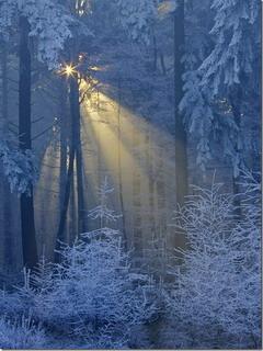 Winter Sun Mobile Wallpaper