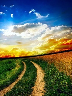 Beautiful Path Mobile Wallpaper