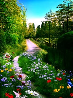 Beautiful Colors Flower Mobile Wallpaper