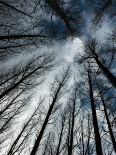 Moon Trees Mobile Wallpaper