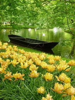 Keukenhof Gardens Mobile Wallpaper