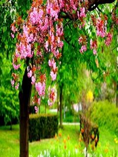 Blossom Flower Mobile Wallpaper