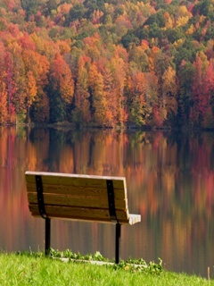 Bench At Lake Mobile Wallpaper