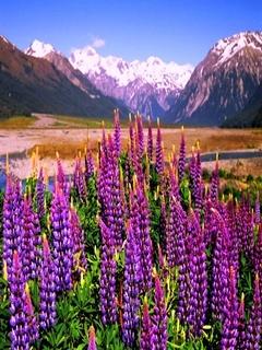 Flower Mountain Mobile Wallpaper
