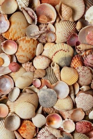 Sea Shell Mobile Wallpaper