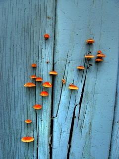 Mushrooms Mobile Wallpaper
