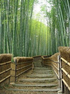 Bamboo Trees Mobile Wallpaper