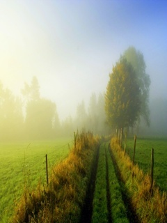 Misty Morning Mobile Wallpaper