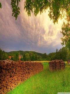 Meadow Summer Mobile Wallpaper