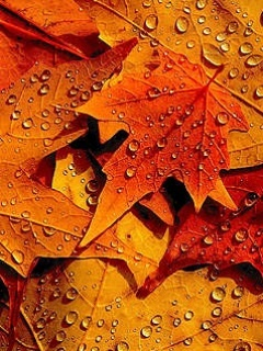 Autumn Leafs Drops Mobile Wallpaper