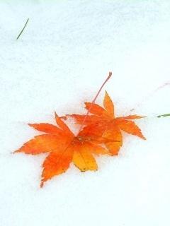 Autumn Snow Mobile Wallpaper