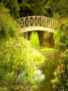 Nature Bridge Mobile Wallpaper