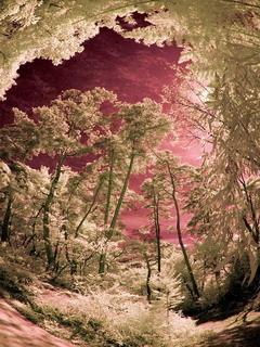 Bessho Forest Mobile Wallpaper
