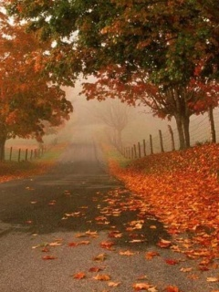 Romantic Autumn Road Mobile Wallpaper