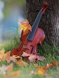 Nature Violin Mobile Wallpaper