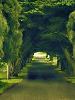 Green Nature Mobile Wallpaper