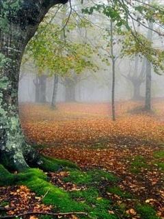 Autumn View Mobile Wallpaper
