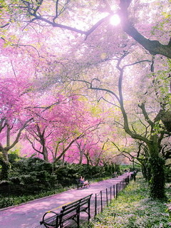 Spring Garden Central Park Mobile Wallpaper